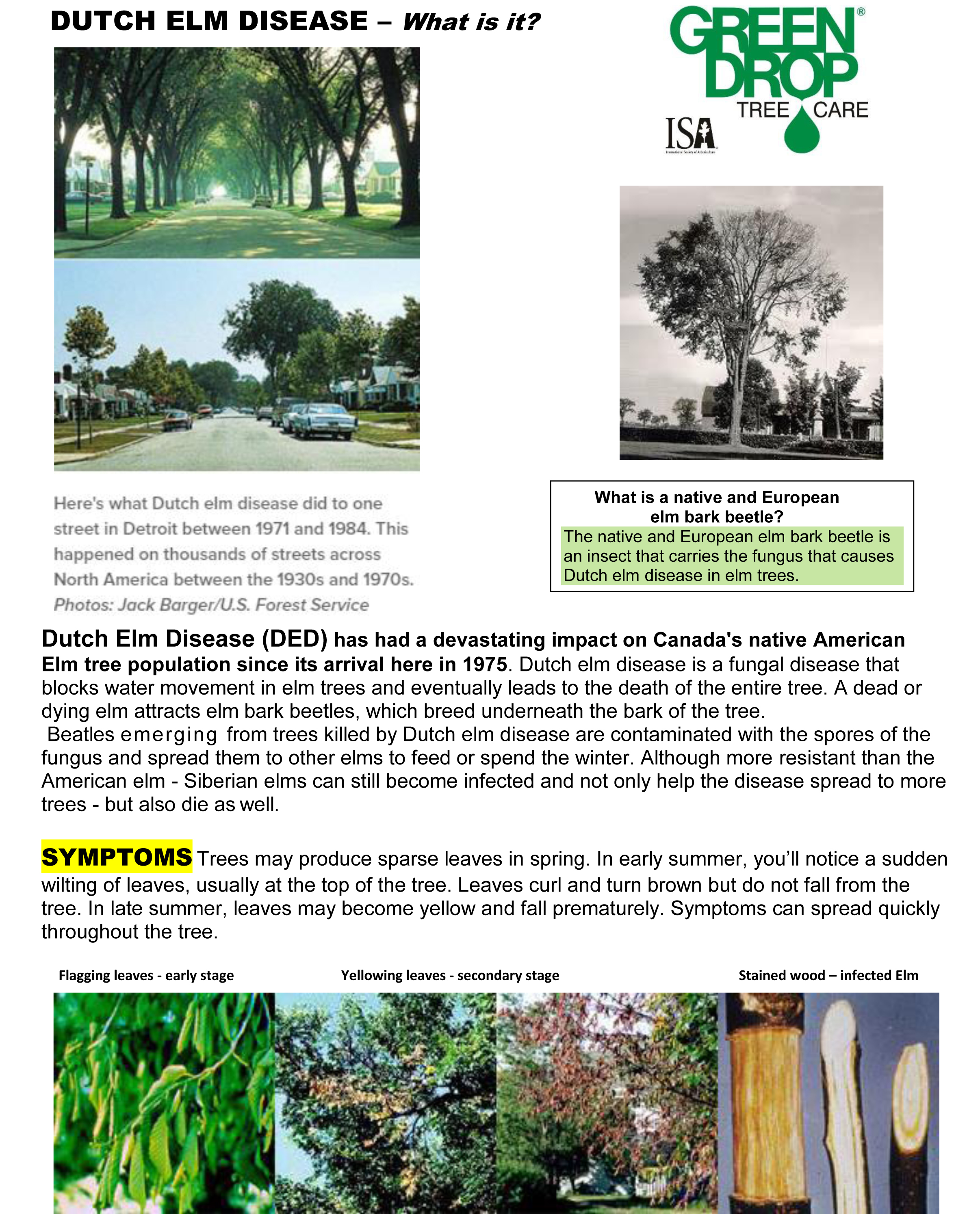 DUTCH ELM DISEASE fact sheet 1