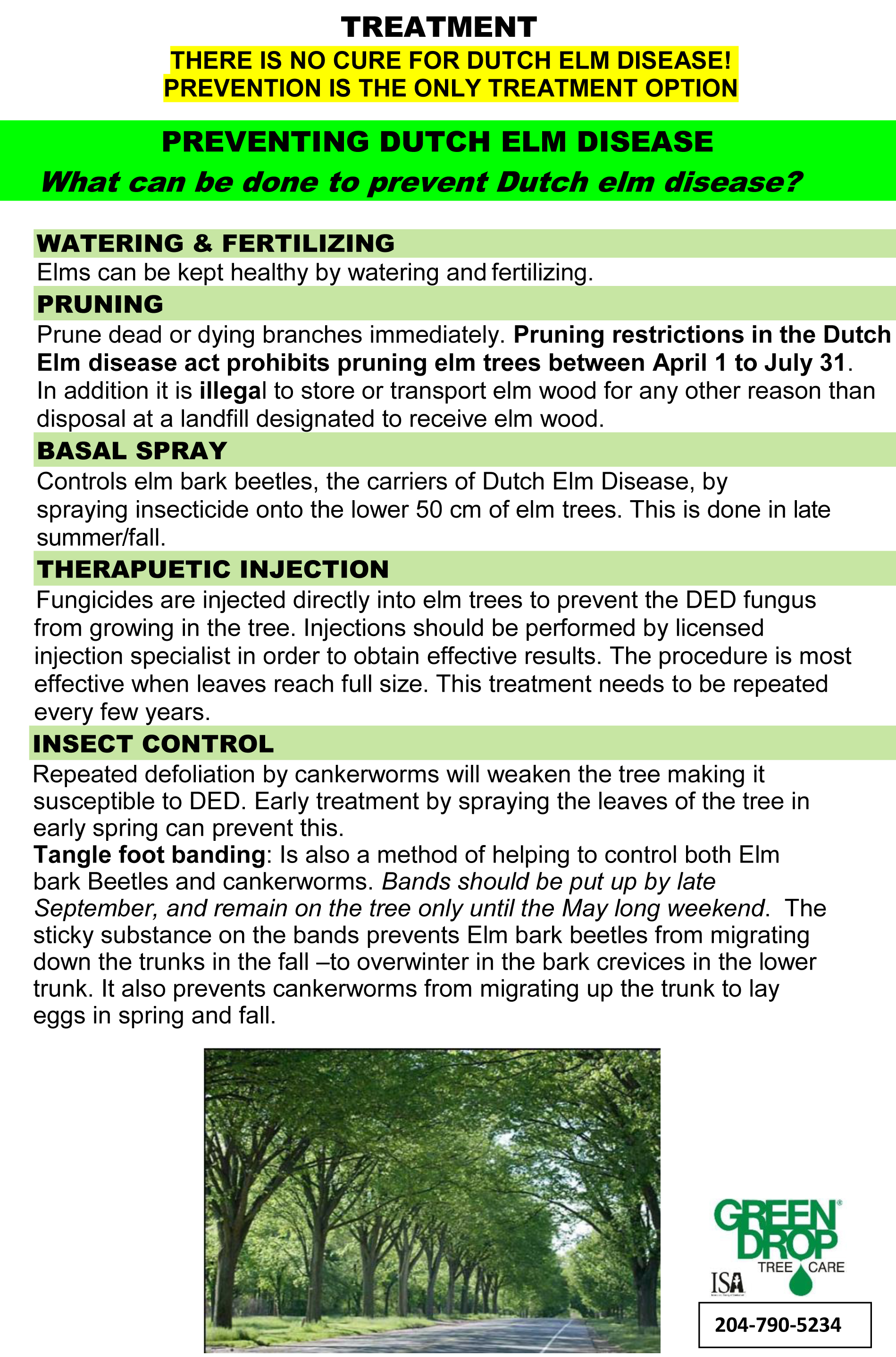 DUTCH ELM DISEASE fact sheet 2